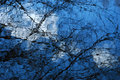 Branches in blue by Brandan