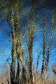 Mirage Forest II by Brandan