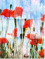 Poppies,4 rain rectangles by Marco Mark