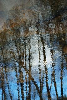 Trees at sunset II by Brandan