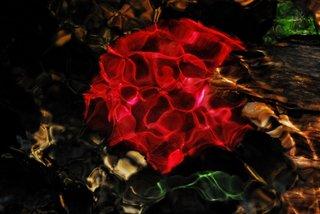 The burning bush II by Brandan