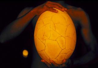 Extinct Bird Egg by Henry Lehn