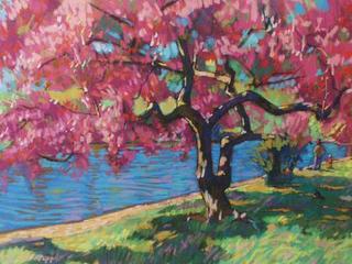 Ornamental Cherry Blossom by David Napp