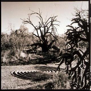 Bataka Tree, Arizona by Stu Jenks