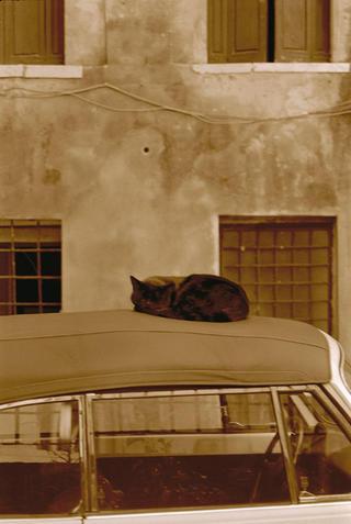 Cat on a Car by Lottie Davies