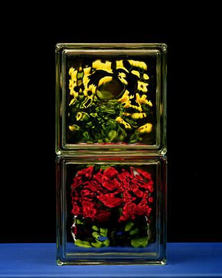 Yellow and Red Roses by José Luis Sanz