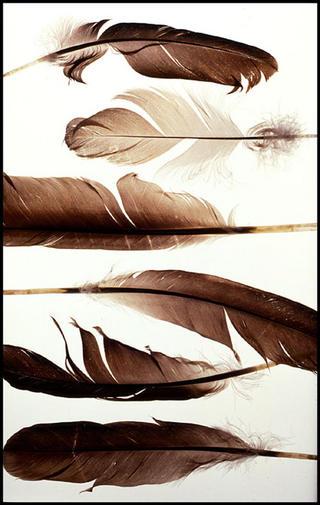 Feathers by Jeremy Webb