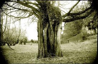 Bewdley Tree by Jeremy Webb