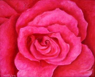 Moulin Rose Rose by Agata Rogalska