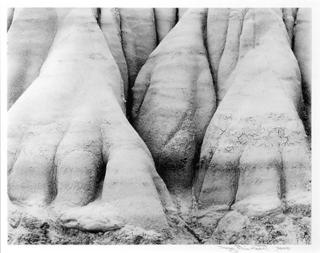 Dinosaur Feet, South Shale, Colorado. by Doug Rhinehart