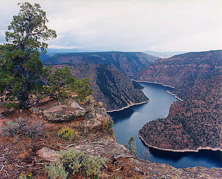 Tree, Red Canyon, Flaming Gorge by Larry Friedman