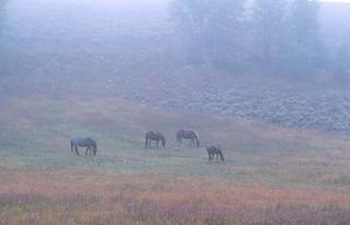 Horses in Fog by Larry Friedman