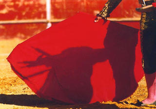 The Bull and It's Shadow, Las Rozas by Anya Bartels-Suermondt
