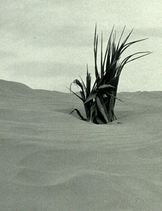 Dunes by Ramón Sans