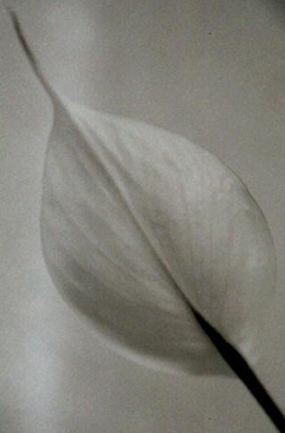 Flower by Ramón Sans