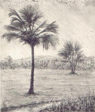Palm Trees by Mª Pilar Gracia Ara