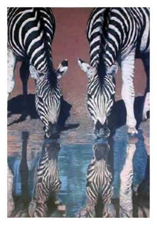 Zebras by Fran Bull