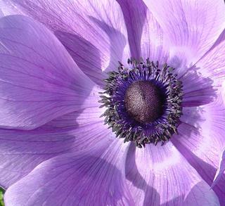 Purple Haze by Sandra Harper