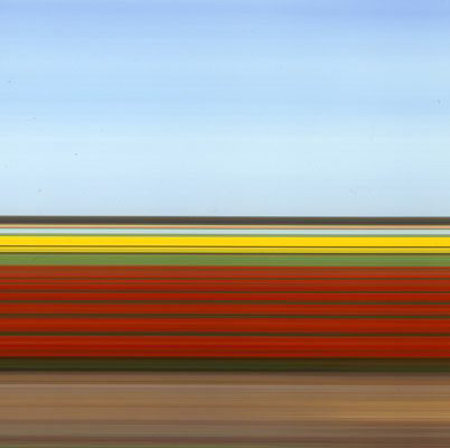 Travelling Still Tulip Fields Holland IV by Rob Carter