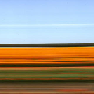 Travelling Still Tulip Fields Holland IX by Rob Carter