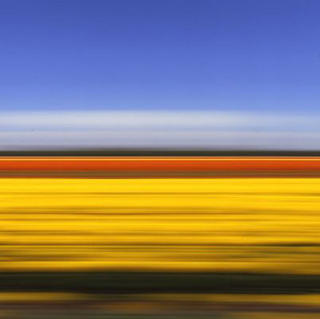 Travelling Still Tulip Fields Holland XI (A/P) by Rob Carter