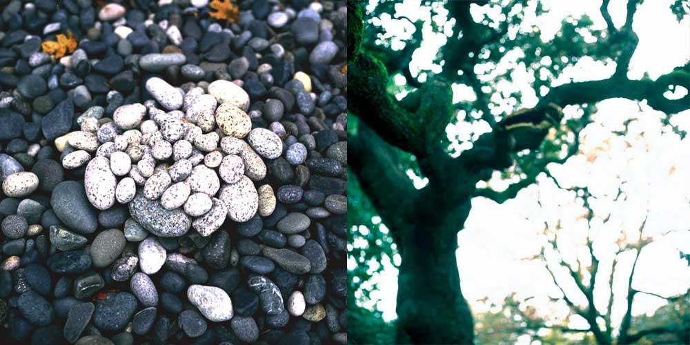 Bigtreerocks (Diptych) by Robert Kenney