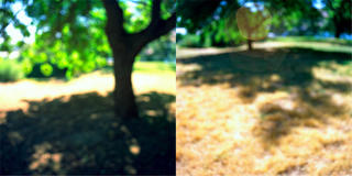 Treeshadows (Diptych) by Robert Kenney