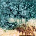 Jaguar by Franco Momo