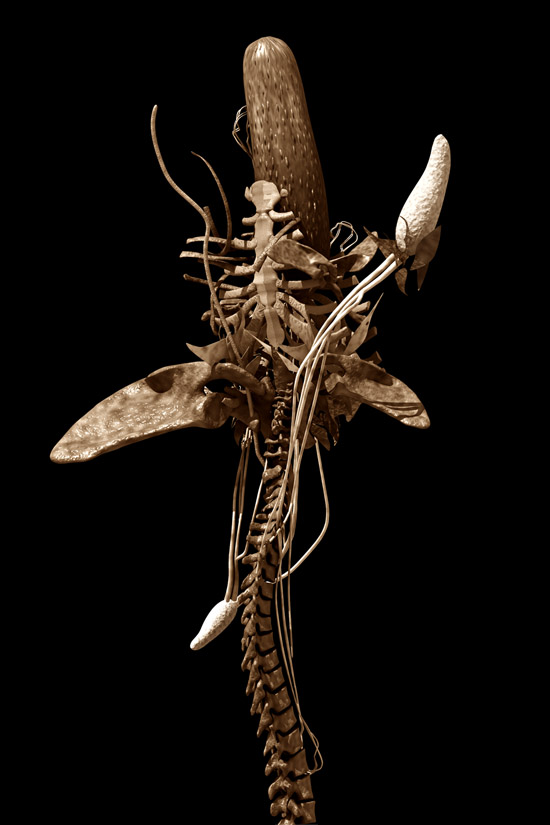 Botanical Osteopathy IV by Emilio López-Galiacho