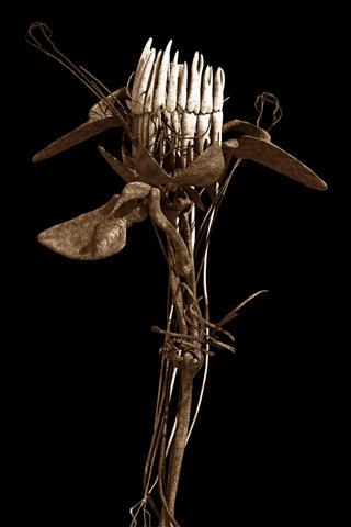 Botanical Osteopathy V by Emilio López-Galiacho