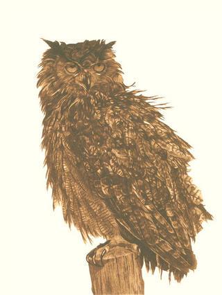 The Owl by Luis Aribayos
