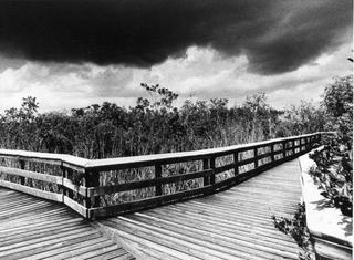 Everglades Footbridge 1: Waiting for the Thunderstorm, Florida by Tiziano Micci