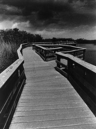 Everglades Footbridge 2: After for the Thunderstorm, Florida by Tiziano Micci