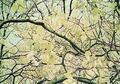 Magnolia IV by John D'Orazio