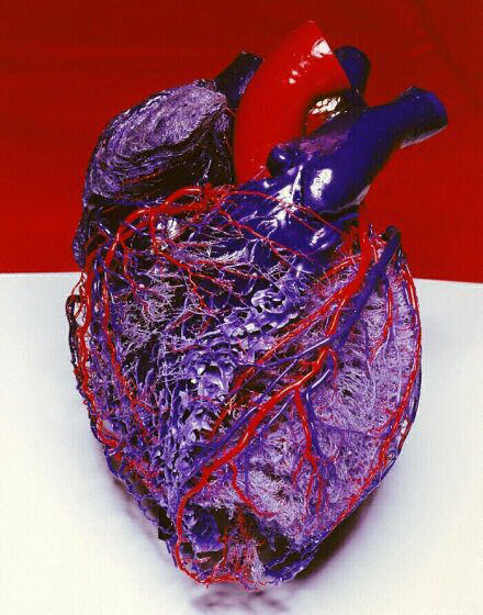 Map of the Human Heart by Marc Quinn