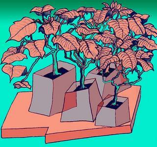 Christmas Flower V - 01 by Luis Yngüanzo