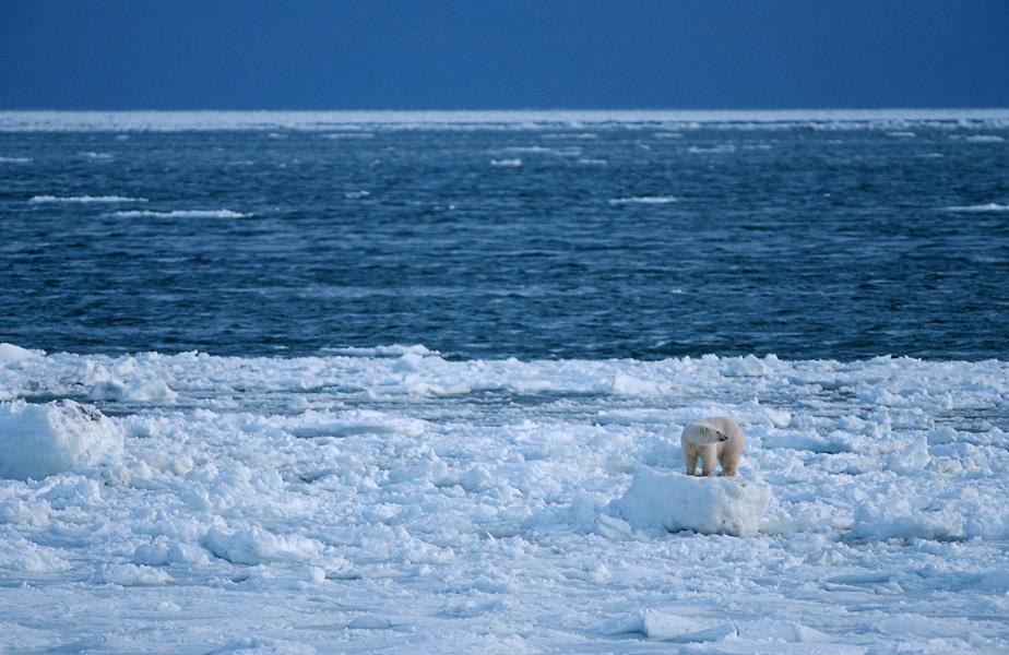 Ice Float by Thomas Sbampato