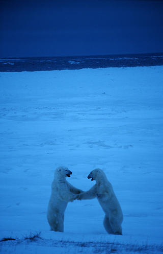 Polar Dance by Thomas Sbampato