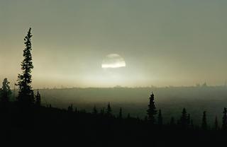 Tundra Morning by Thomas Sbampato