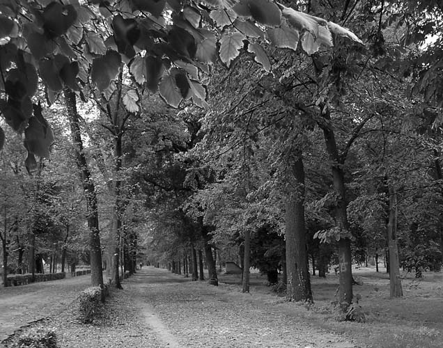 Autumn by Eduardo Palma