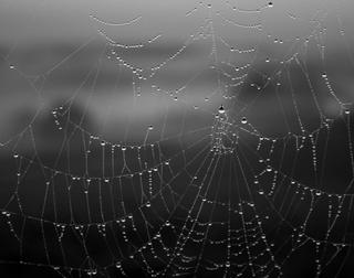 Spider's Web by Eduardo Palma
