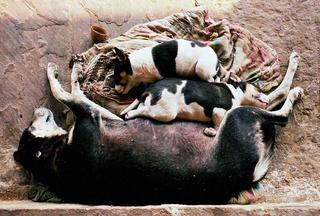 Sleeping Dogs, India by Jamie Ball