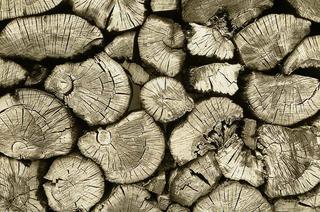 Bog Oak, Ireland by Jamie Ball