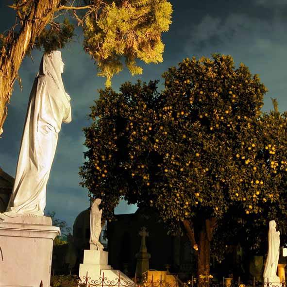 Orange Tree by Gerardo Otoniel