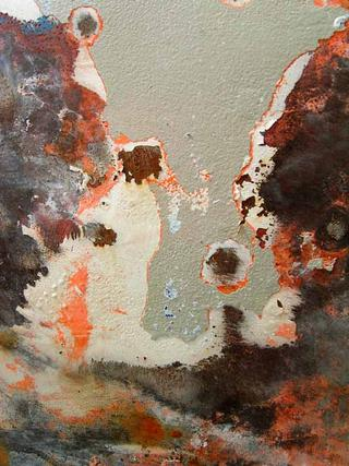 Seed by Yvette Boulet