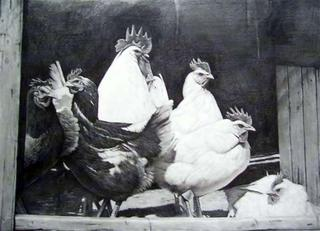 Hen Run by Magnoni