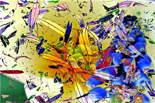 Feathers by Pedro Pablo Izquierdo