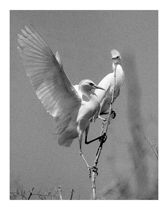 Winds of Dreams by Nino Grangetto