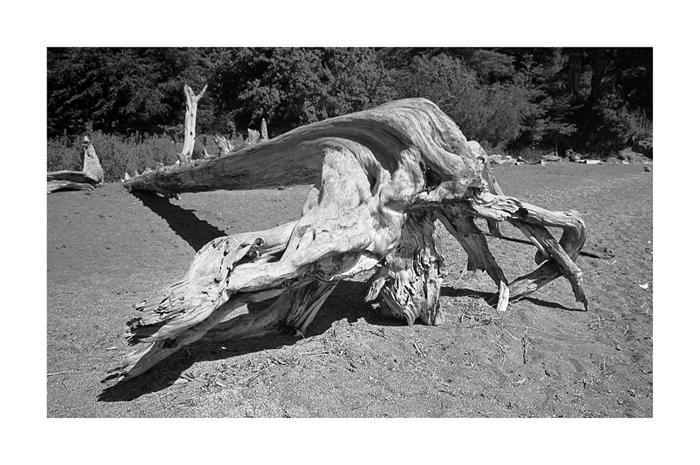 Worried Root by Nino Grangetto