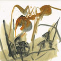 Territories Series: Ant  30x30 5 by Oscar Astromujoff